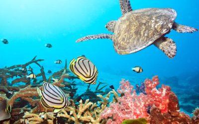 Мальдивы: Рай на Земле может скоро исчезнуть